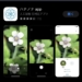 """スマホのカメラで花の名前が分かる無料アプリ""""ハナノナ"""""""