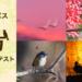 OLYMPUSが鳥フォトコンテスト2020を開催中ですよ