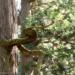 """慈光寺に続く杉並木にある""""龍神杉""""を撮ってきました"""