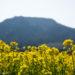 {西蒲区}上堰潟公園 :花の撮影におすすめ